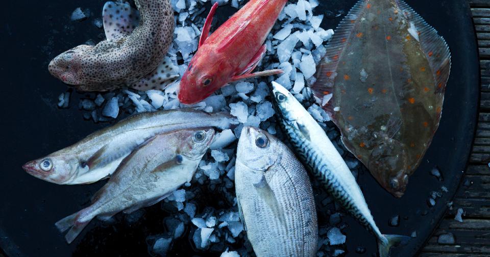 Photo les poissones bons plans