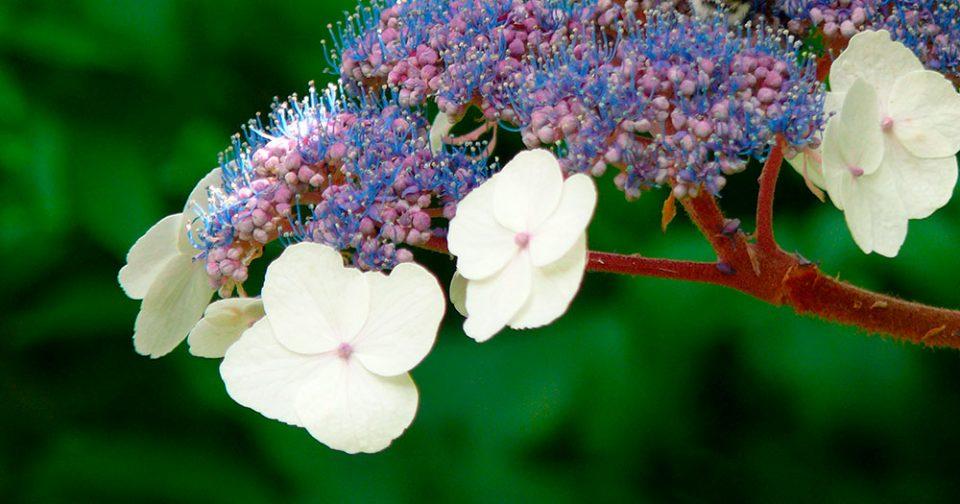 fête des plantes Bagnoles
