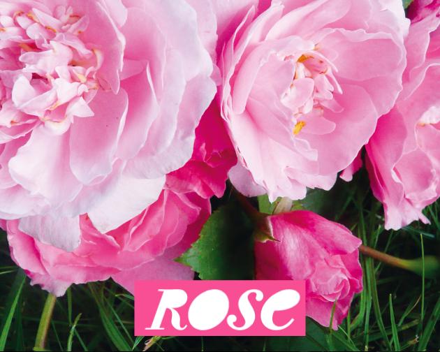 Rose le magazine